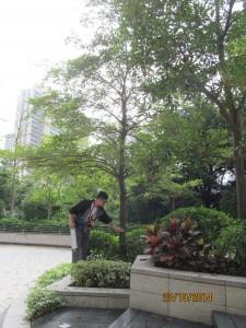定期樹木檢查