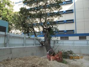 樹木意外報告