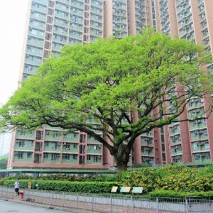 Old and Valuable Trees (OVT)
