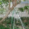 拉纜或支撐物與樹身直接接觸-1