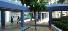 新種植樹木