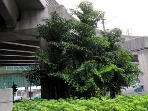 天橋底或有蓋地方綠化