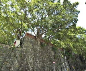 Stone wall tree