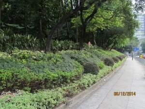 與其他園藝灌木或花草密集種植