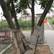 保護物長時間包裹樹幹-2
