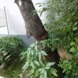 保護物長時間包裹樹幹-1