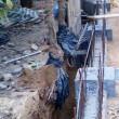 於樹旁挖溝或進行不必要的斷根-2