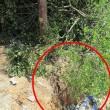 於樹旁挖溝或進行不必要的斷根-1