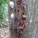 樹木腐朽真菌-1